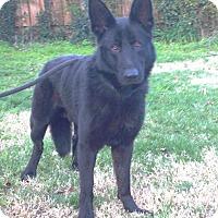 Adopt A Pet :: Lucky - Pleasant Grove, CA