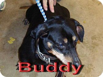 Dachshund Mix Dog for adoption in Coleman, Texas - Buddy