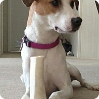 Adopt A Pet :: Daisy - Albemarle, NC