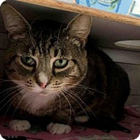 Adopt A Pet :: MEOW - Canfield, OH