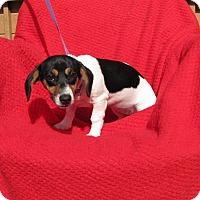 Adopt A Pet :: Sicily - Oakland, AR