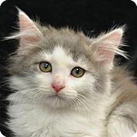 Adopt A Pet :: Sita160821 - Atlanta, GA