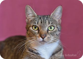 Domestic Shorthair Cat for adoption in Millersville, Maryland - Ruthie