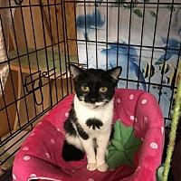 Adopt A Pet :: TINA (TINKER-BELL) - New City, NY