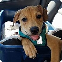 Adopt A Pet :: Buster - Bernardston, MA
