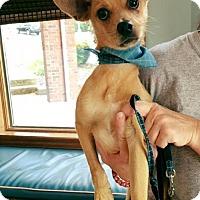 Adopt A Pet :: Sebastian/DD - Columbia, TN