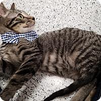 Adopt A Pet :: Miso - Pasadena, CA