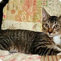 Adopt A Pet :: Lassie - Bradenton, FL