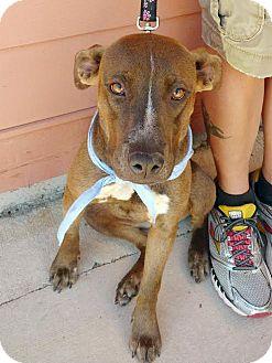 Terrier (Unknown Type, Medium) Mix Puppy for adoption in Homewood, Alabama - Mandy