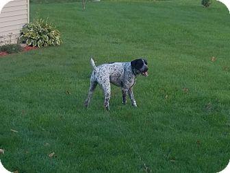 German Shorthaired Pointer Mix Dog for adoption in Linden, Michigan - Soren