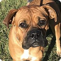Adopt A Pet :: Ginger *MEET ME!* - Wakefield, RI