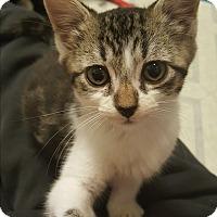 Adopt A Pet :: Opal - Pottstown, PA