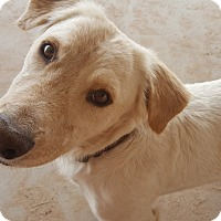Adopt A Pet :: Parker - Las Cruces, NM