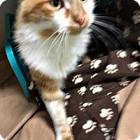 Adopt A Pet :: Brody - Flint, MI
