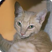 Adopt A Pet :: Declan - Tucson, AZ