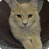 Adopt A Pet :: Einstein - Michigan City, IN