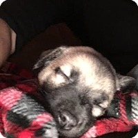 Adopt A Pet :: Edison - Alpharetta, GA