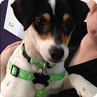 Adopt A Pet :: Cagney - Thousand Oaks, CA