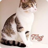 Adopt A Pet :: Tog - Livonia, MI