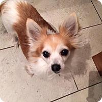 Adopt A Pet :: Klick - Pierrefonds, QC