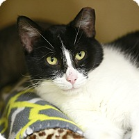 Adopt A Pet :: Millie - Kettering, OH