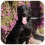 Photo 1 - Labrador Retriever Mix Dog for adoption in Chula Vista, California - Blackie