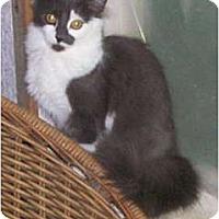 Adopt A Pet :: Twinkle & Little Star - Portland, ME