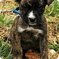 Adopt A Pet :: Kate - Staunton, VA