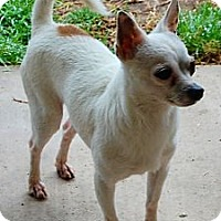 Adopt A Pet :: Petey - Kempner, TX