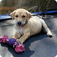 Adopt A Pet :: Twix - Staunton, VA