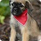 Adopt A Pet :: Mellow