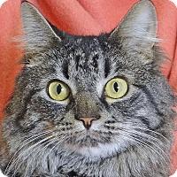 Adopt A Pet :: Rosie - Renfrew, PA