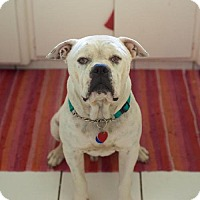 Adopt A Pet :: Frankie - Beverly Hills, CA
