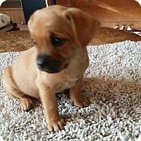 Adopt A Pet :: JEM - Rancho Cucamonga, CA