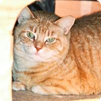 Adopt A Pet :: Big Tig - Worcester, MA
