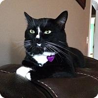 Adopt A Pet :: Nascar - Homewood, AL