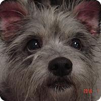 Adopt A Pet :: Tonya - Gainesville, FL