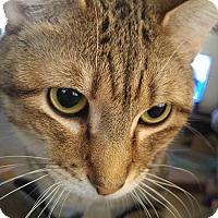Adopt A Pet :: Castor - Glendale, AZ