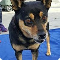 Adopt A Pet :: Wally - Costa Mesa, CA
