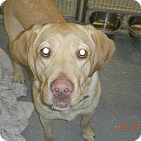 Adopt A Pet :: GUS - Sandusky, OH