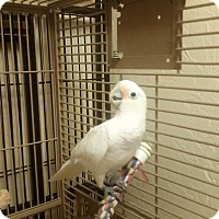 Adopt A Pet :: Gigi - Tampa, FL