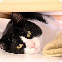Adopt A Pet :: Tank - Bellevue, WA