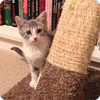 Adopt A Pet :: Coletete - Covington, KY