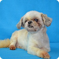 Adopt A Pet :: Tulip Barkley - Urbana, OH