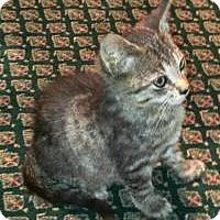 Adopt A Pet :: Alfonse - East Hanover, NJ