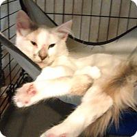 Adopt A Pet :: Penelope - Bayside, NY