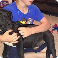 Adopt A Pet :: Rain - Piedmont, SC