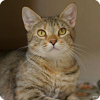 Adopt A Pet :: Elsa - East Hartford, CT