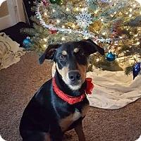 Adopt A Pet :: Freya - Bristolville, OH