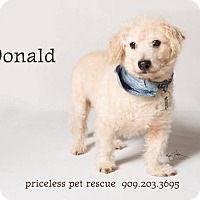 Adopt A Pet :: Donald - Claremont - Chino Hills, CA